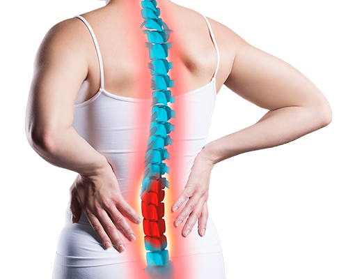 spine-3